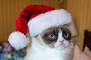 Grumpy cat - 2012 top memes
